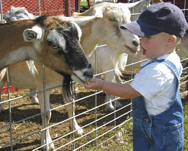 Kids Tampa: Animal Encounters - Fun 4 Tampa Kids