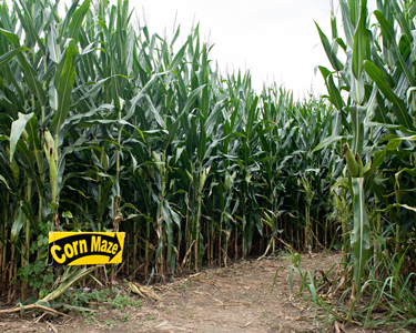 Kids Tampa: Corn Mazes and Farm Fun - Fun 4 Tampa Kids