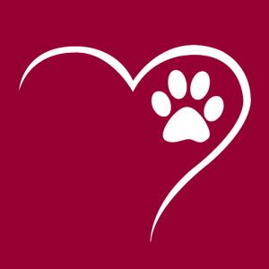 Critter Camp at the Humane Society of Tampa Bay