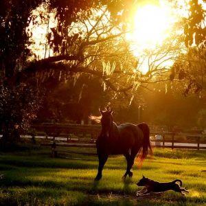 Whispering Oaks Equestrian Center