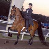 Arbordale Riding Academy