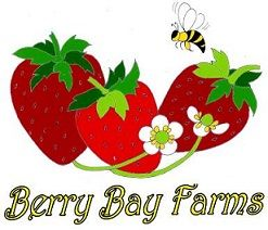 Berry Bay Farms Strawberry Picking