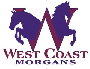 West Coast Morgans Riding Lessons