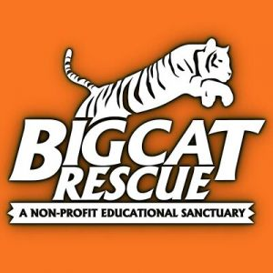 Big Cat Rescue Sanctuary