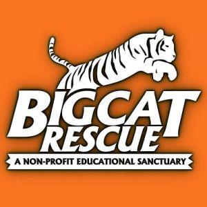 Big Cat Rescue Sanctuary
