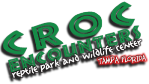 Groupon Deal: Croc Encounters Saturday Entry Package for Two or Four Plus Tortoise Feeding and Photo with a 3-4 Ft. Alligator