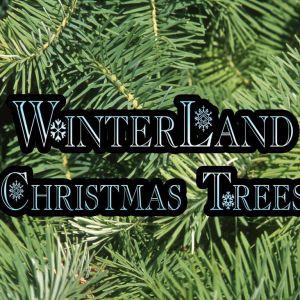 Winterland Christmas Trees
