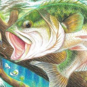 Fish and Wildlife Commission Fish Art Contest