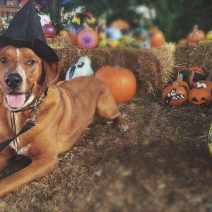 Tampa Bay Humane Society Pumpkin Patch